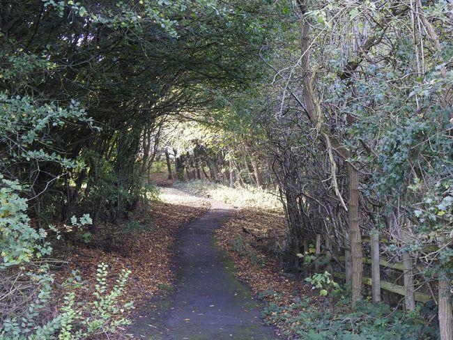 Autumn Tree Nature Outdoors Berwick Tweedmoth Autumn Leaves Tyneside And Northumberland