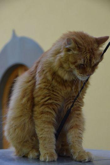 Mammal Animal Themes Feline Cat One Animal Animal Pets Domestic Animals