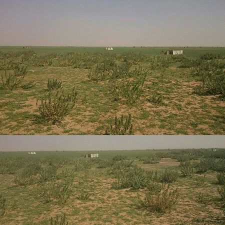 روضه_نوره اليوم الجمعة 1-5-1436 هجري السعودية  nature plants plant hdr ربيع مكشات كشته تصويري