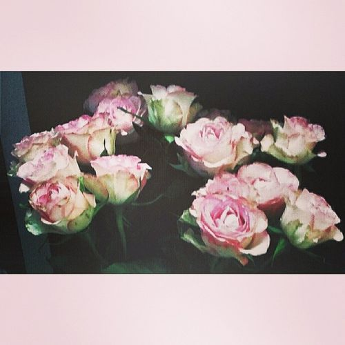 Roses are pink as my deepest dreams Love Tagsforlikes @TagsForLikes Instagood Me like follow cute photooftheday tbt followme tagsforlikes girl beautiful happy picoftheday instadaily food swag amazing tflers fashion igers fun summer instalike bestoftheday smile like4like friends instamood