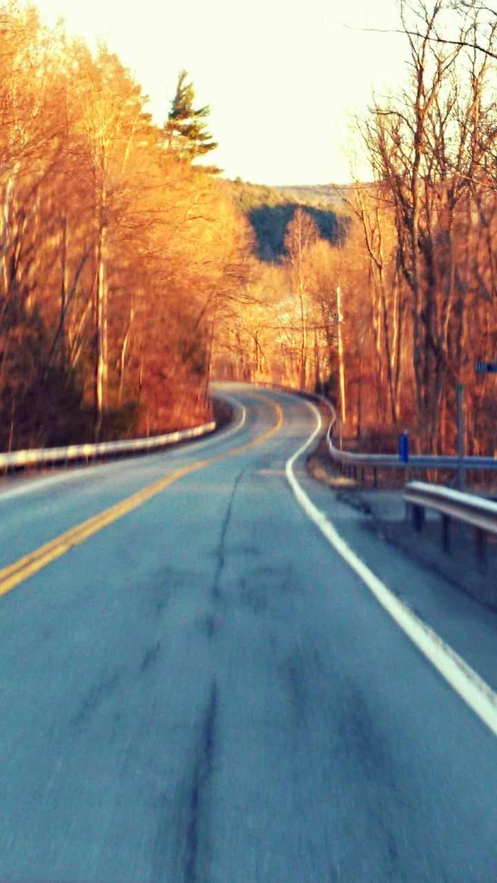road, tree, the way forward, transportation, road marking, bare tree, curve, no people, nature, day, outdoors, dividing line, tranquility, landscape, clear sky, scenics, beauty in nature, sky