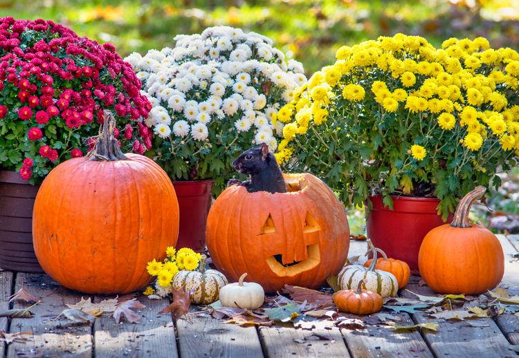 View of pumpkins on flowering plants
