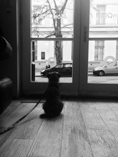 C'mooooon let's go out master Dog Monolok Blackandwhite First Eyeem Photo