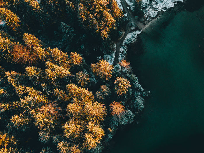 High angle view of autumn trees by river in forest