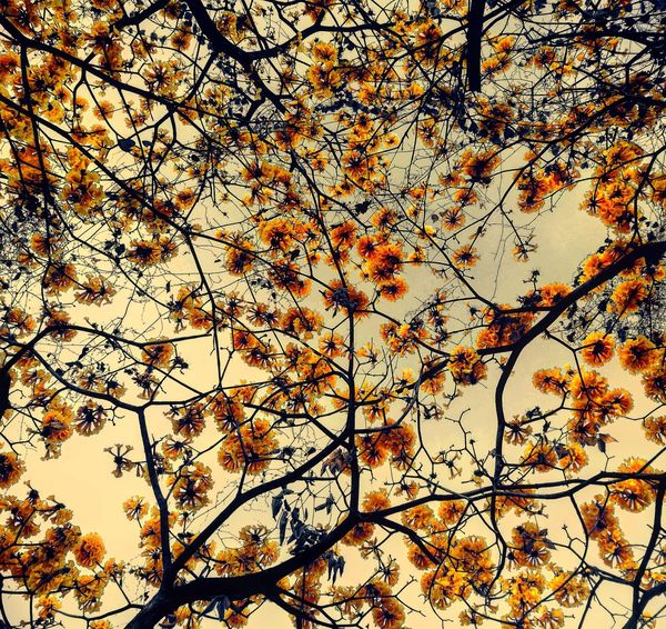 Backgrounds Nature No People Tree Beauty In Nature Outdoors Flower Sky