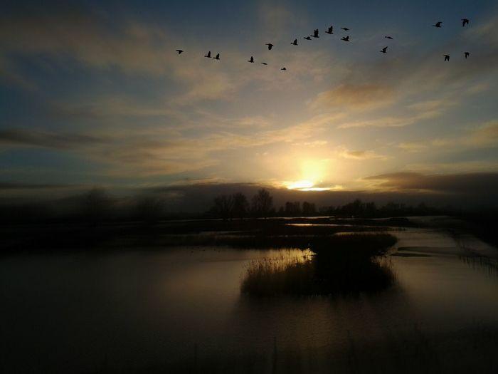 Silhouette birds flying over river against sky during sunset