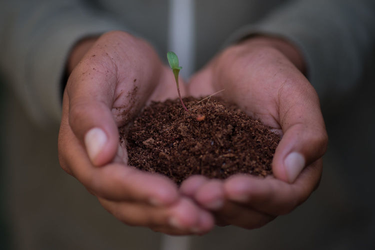 Life Human Hand One Person Hand Holding Human Body Part Hands Cupped Beginnings Close-up Selective Focus Real People Growth Unrecognizable Person Focus On Foreground Indoors  Men Freshness Nature Midsection Plant Care Finger Gardening Planting