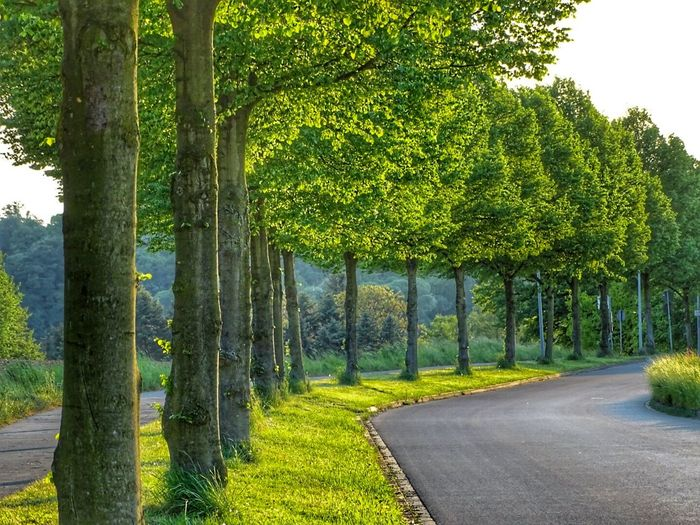 Deutsche Alleenstrasse Allee Tree Green Nature Trees Alee Street Nature Nature Photography Panoramashot Natureshots Streetphotography Tree Trunk Grass No People Outdoors Green Color Landscape Growth Beauty In Nature Road Sky