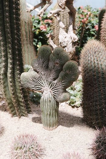 Close-up of cactus in field