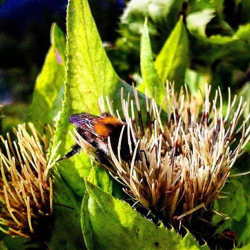 Nature Bumblbee Flower Photographer Followme Jackub_maralik