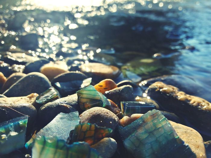 No People Sea Beach Nature Day Crustacean Outdoors Close-up Water Sea Life Freshness Fragility Beauty In Nature Nature Large Group Of Objects Pebble Backgrounds EyeEm Selects Smart Phone Sunlight Yellow The Week On EyeEm