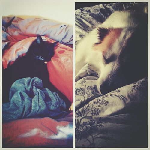 My too best sleeping buddies Living The Lazy Life Dog Cat