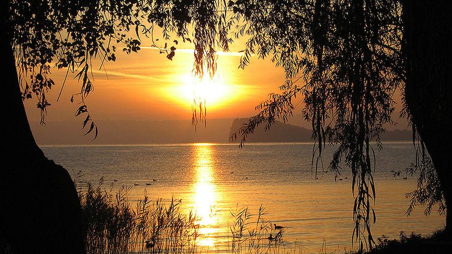 Bolsena Lake Bolsena Carpfishing Tree Water Sunset Beauty Lake Beach Silhouette Sunlight Sun Gold Colored