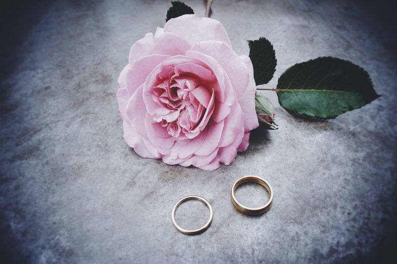 High angle view of rose and wedding rings on table
