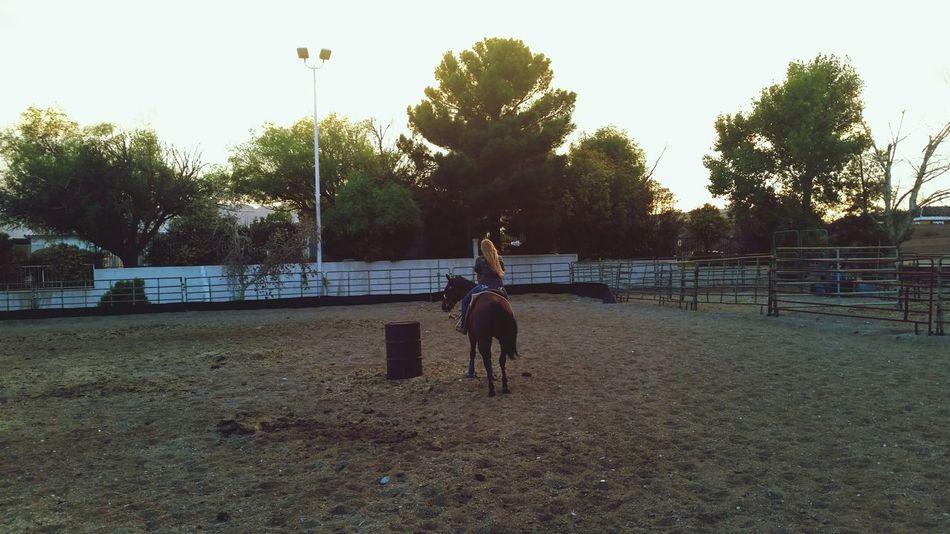 Indie Enjoying Life Horse Summer Pretty Awww