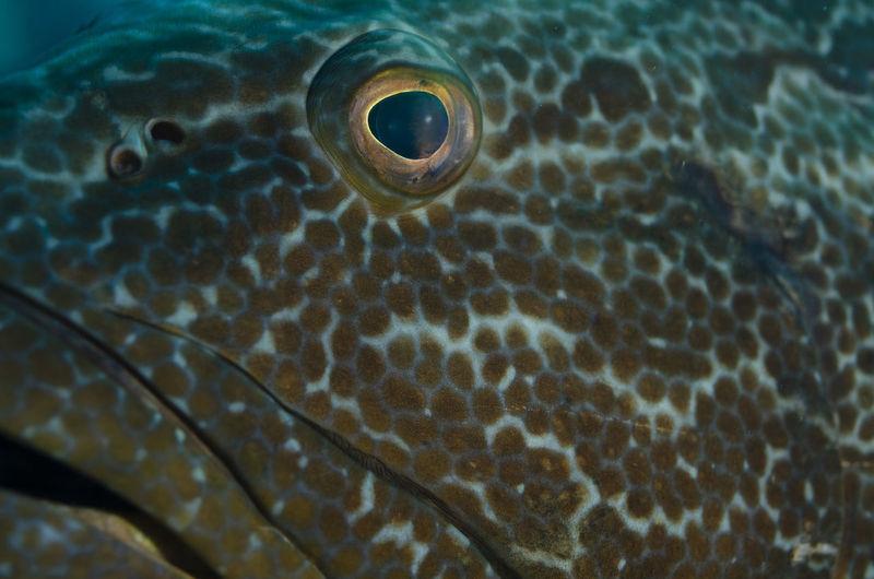 Eye of the grouper