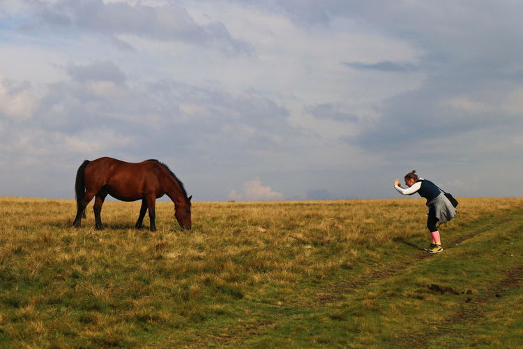 Horses standing in a field