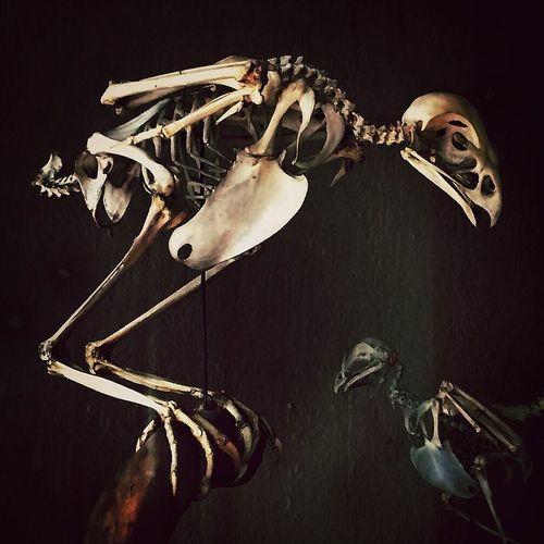 Skeleton Bird Checking Out Artifacts Tadaa Community