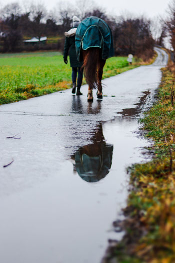 Rear view of man with dog walking in rain