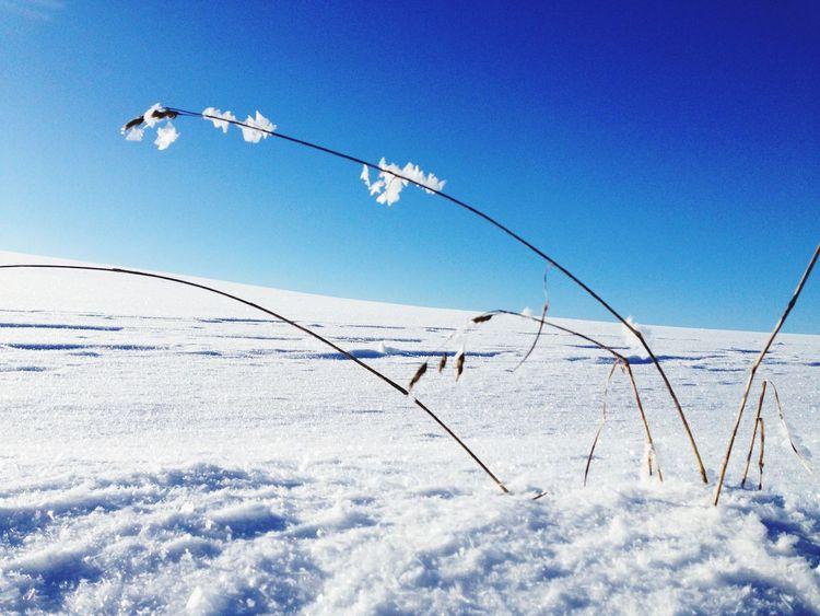 Snow Sun Winter Schnee Sonne First Eyeem Photo
