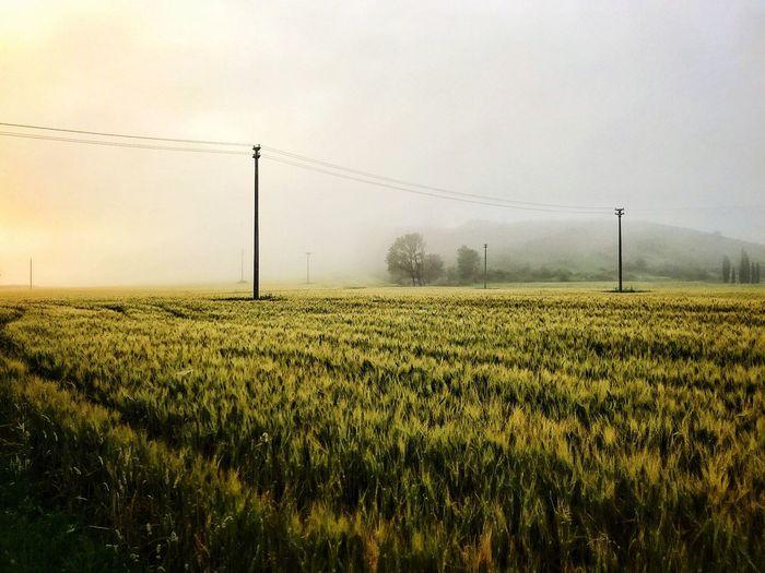Foggy Day Foggy