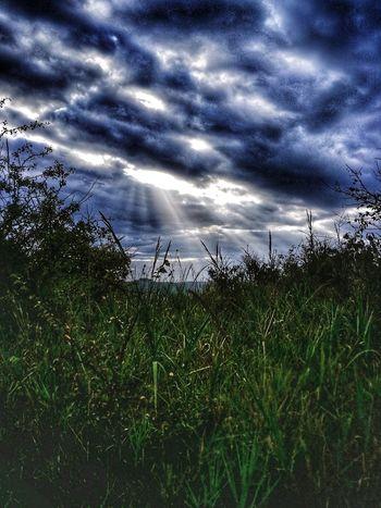 Raggi Di Sole Nuvole Tempestose Orizzonte Water Sea Sky Grass Animal Themes Horizon Over Water Plant Cloud - Sky