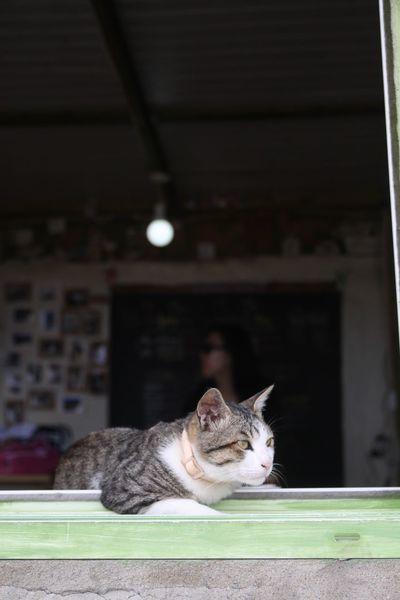 Cat Animals Animal Themes Animal Window Cafe 고양이 동물 반려동물 애완동물 창문 카페