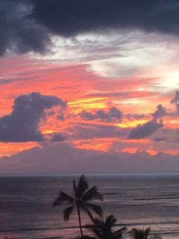 Pacific Sunset Palm Trees 🌴 Oahu / Hawaii No Edit/no Filter No People Perspectives On Nature Island Of Oahu, Hawaii Oahu Oahu, Hawaii Tropical Island Hawaii Tropics Pacific Ocean View Oahu Hawaii Oahu Sunset An Eye For Travel The Great Outdoors - 2018 EyeEm Awards