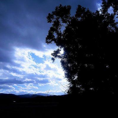 The sky and light and shadow… Sky Light Shadow Cedar Tree