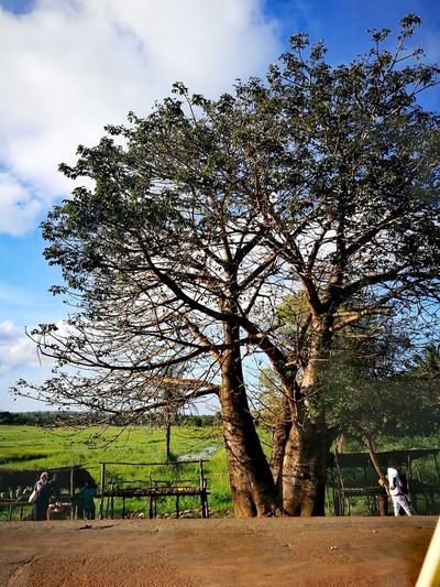 Sky Cloud - Sky Growth Day Nature Tree No People Outdoors Beauty In Nature Freshness