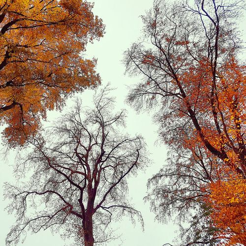 Hanging Out Taking Photos Colours Of Nature Trees And Nature Fall Leaves Fall Beauty Autumn Colors Trees Fall Colors Autumn Collection Autumn🍁🍁🍁 Fall Fall Meeting Winter