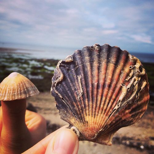 Close-up of cropped hand holding seashell
