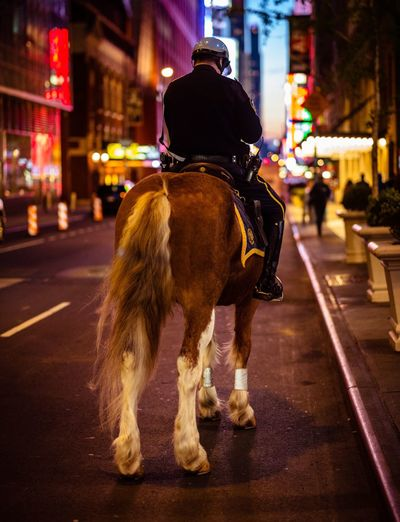 Rear view of policeman riding horse on city street at night