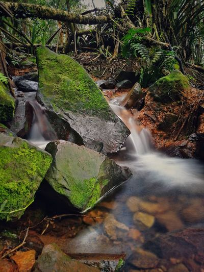 Small Stream in the forest of Mount Halimun Water Long Exposure Nature Outdoors Beauty In Nature Forest Scenics INDONESIA HuaweiP9 HuaweiP9Photography Huawei P9 Photos Travel Destinations Beauty In Nature Vacations Traveller Travel TakenwithhuwaeiP9 Takenwithmyphone Takenwithhuawei Takenwithsmartphone Travelindonesia Hiking Day Hiking Hiking Trip Hiking, Mountains, Adventure
