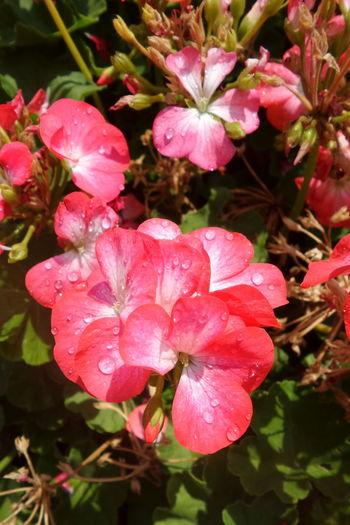 Bloom RedFlower
