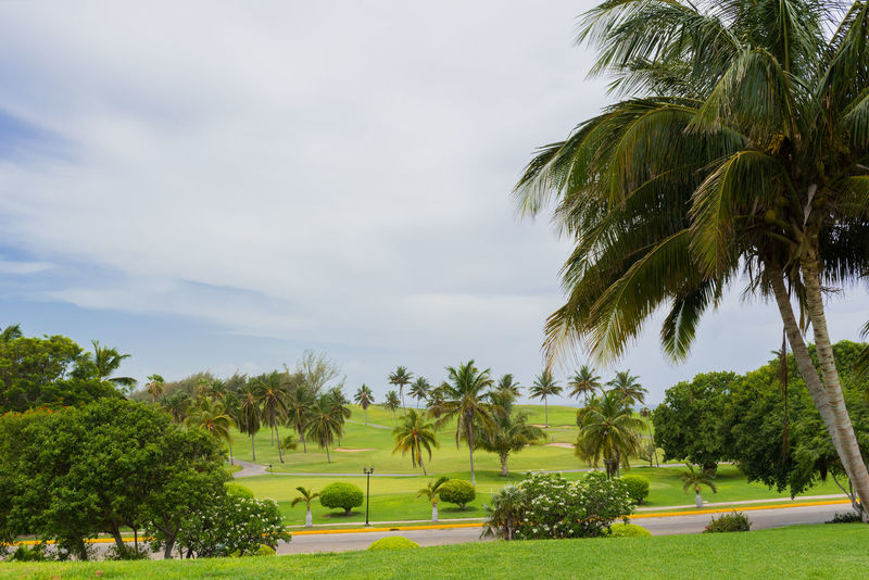 Golf Golf Course Palms Parkour Place Of Worship Tee Architecture Beauty In Nature Day Grass Green Color Growth Lawn Links Nature No People Outdoors Palm Tree Play Playing Sky Sport Summer Sward Tree