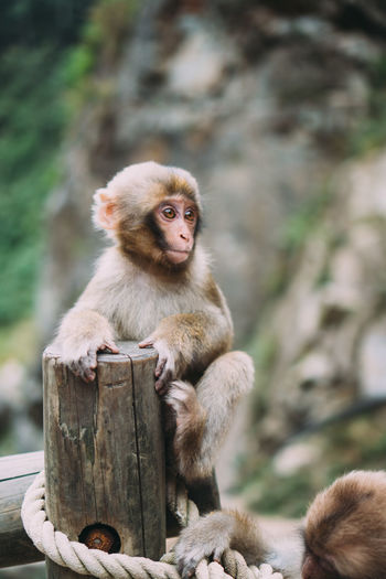 Portrait of monkey sitting on wood