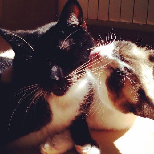 Panterathecat Cookiethecat Familyvalues Cat Catsagram Catlovers