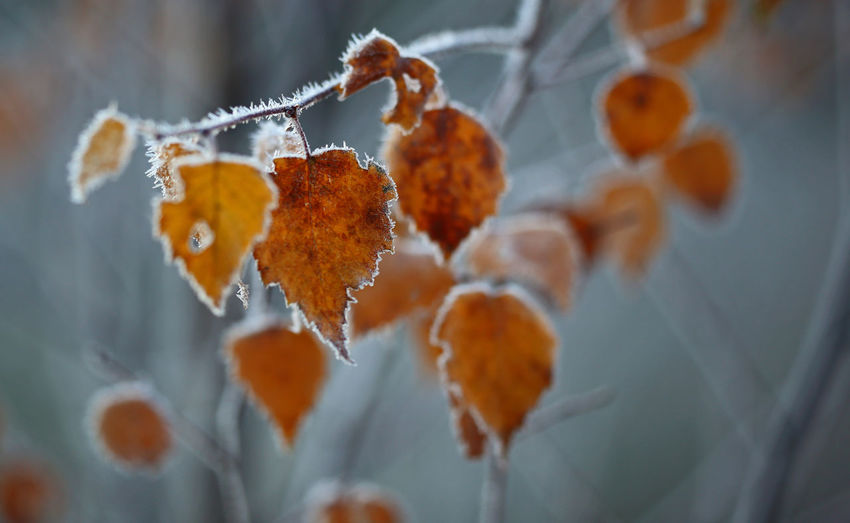 Frozen Nature