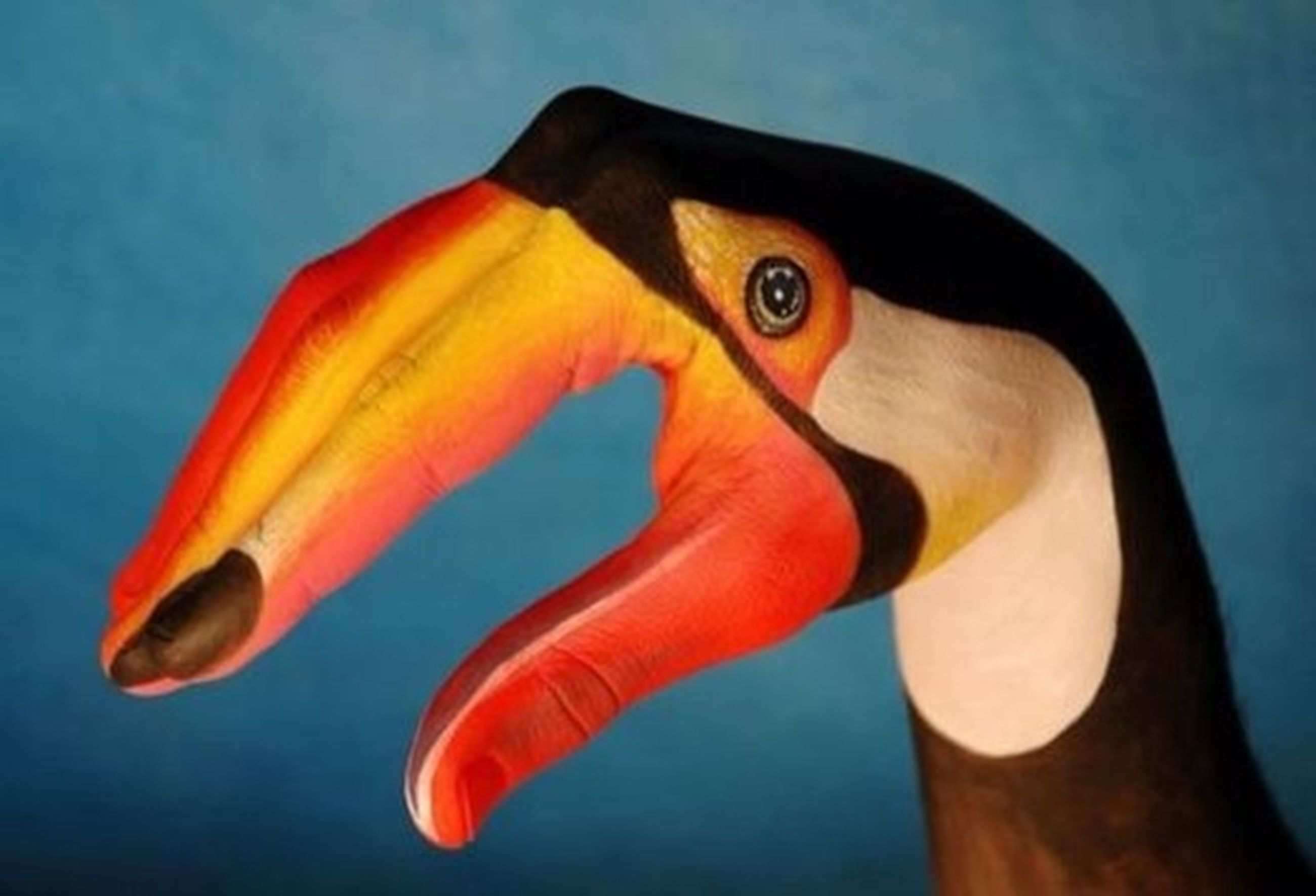 animal themes, one animal, close-up, orange color, beak, wildlife, animals in the wild, animal head, beauty in nature, yellow, nature, bird, no people, blue, multi colored, swimming, outdoors, side view, animal representation, zoology