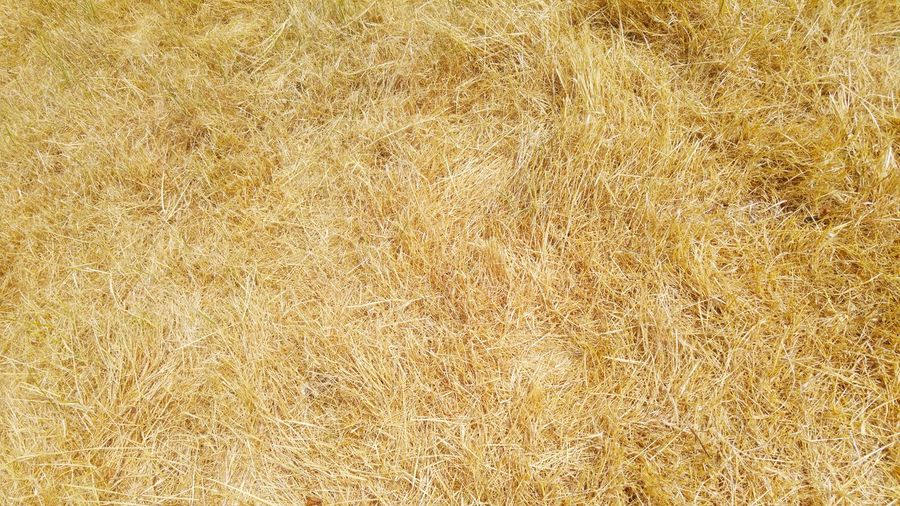Dry Grass Dry Vegetation Hot Summer Days In A City Backgrounds Yellow Full Frame Textured  Gold Colored Pattern Abstract Photography Themes Close-up