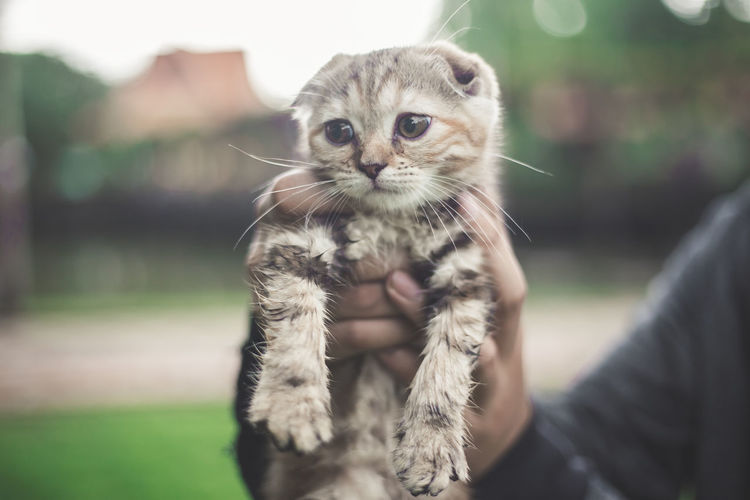 Portrait of tabby kitten outdoors