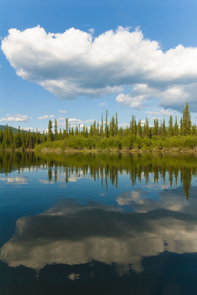 Yukon river scenery in Canada Blue Calm Canada Clouds And Sky Forest Landscape Nature No People North Outdoors Reflection Reflection Remote River Scenics Sky Spruce Summer Taiga Tranquility Tree Water Wilderness Yukon Yukon River