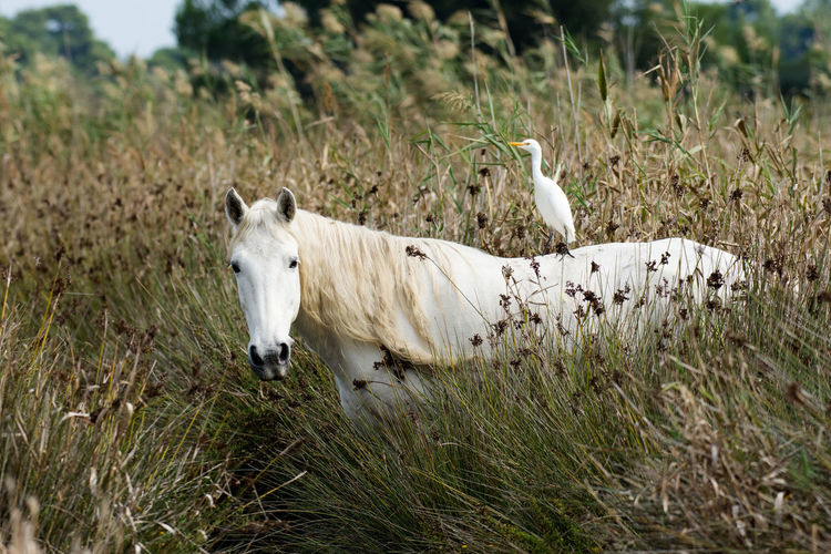 Seagull Perching On Horse Amidst Plants
