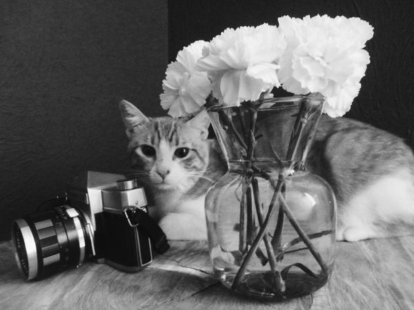 Camera Porn Cat Lovers Digital Digital Photo Digital Photography Flower