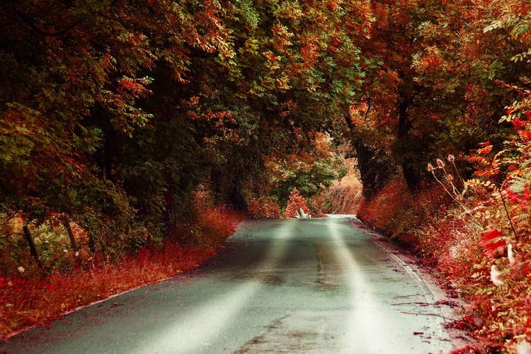 The Way Forward Tree Road Nature Autumn Day Outdoors Beauty In Nature Scenics No People Trees Red Road Roadtrip Path Pathway Landscape Tranquil Scene Tranquility Beauty In Nature