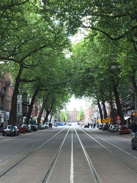 Street Amsterdamcity Amsterdam Trees Tree Perspective