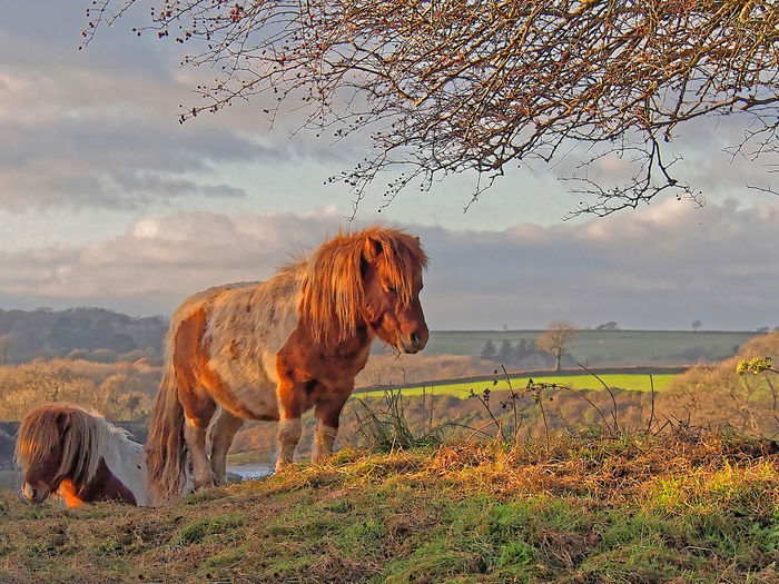 Horse Photography  Horses Pony Fine Art Photography Fine Pony Rural Animal Themes Beauty In Nature Cloud - Sky Field Horse Photography  Landscape Nature Pembrokeshire Tranquility Scene West Wales One Animal Outdoors Mammal Livestock Horse Grass Domestic Animals Sky
