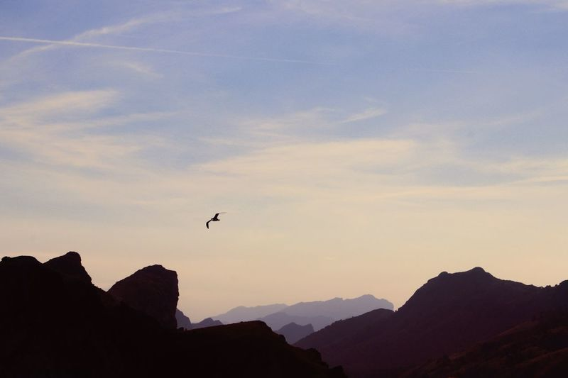 Low Angle View Of Silhouette Bird Flying Over Mountains Against Sky