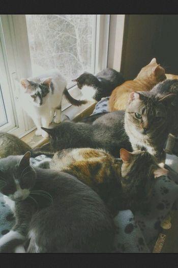 Cats Meow.